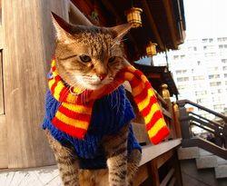 湯島天神の猫