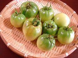 未熟トマト