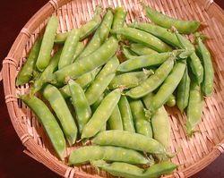 キヌサヤの豆