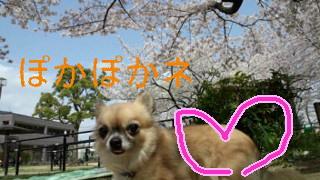 110410_105811_ed.JPG