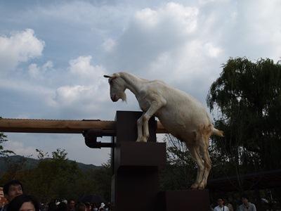 京都市動物園のヤギ