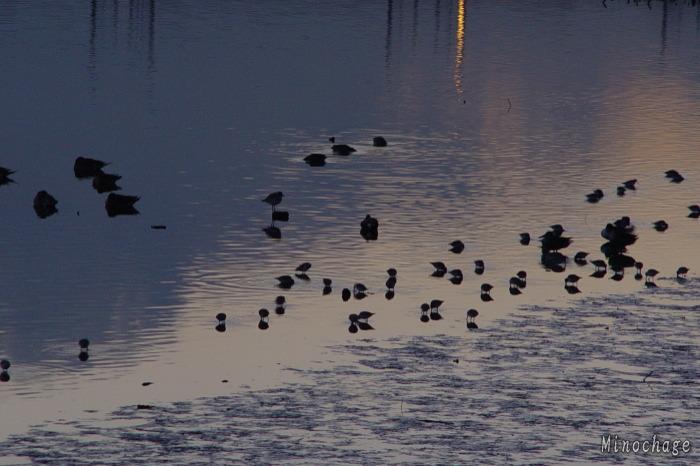 谷津の野鳥