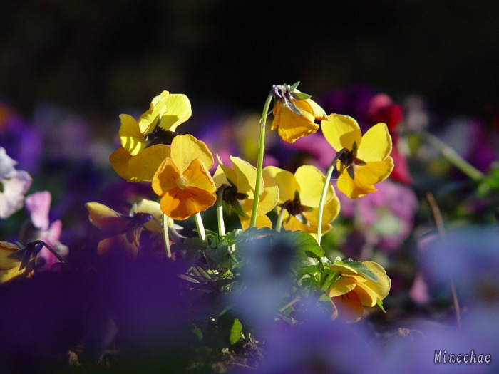 Gyoda Park Flower