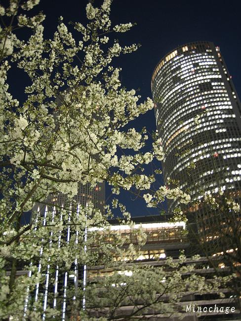 名古屋駅前ー桜