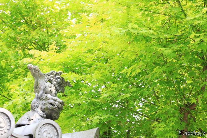 京都:萌え上がる新緑
