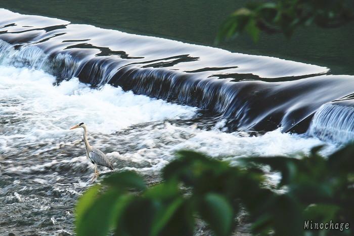 京都: 嵐山の川べりで