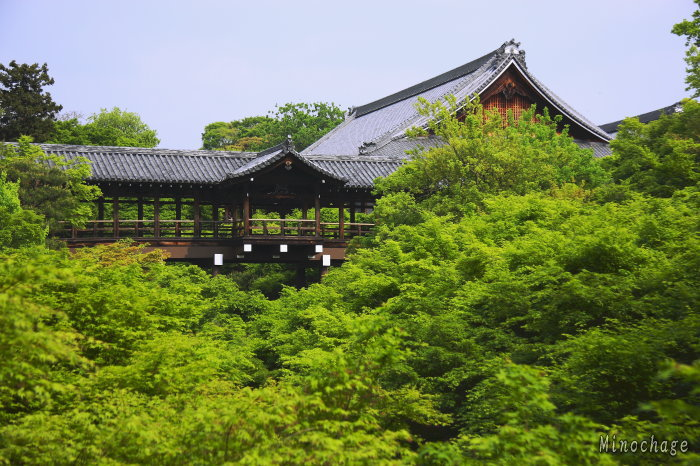 緑一色東福寺