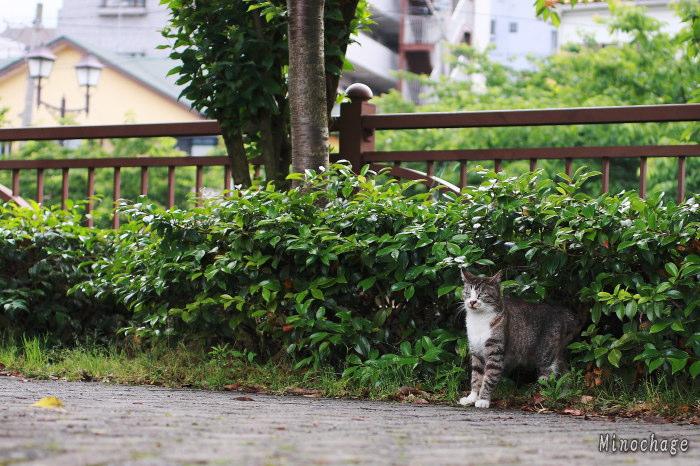 ご近所ネコ君(1)