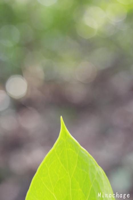 春の鼓動(1)