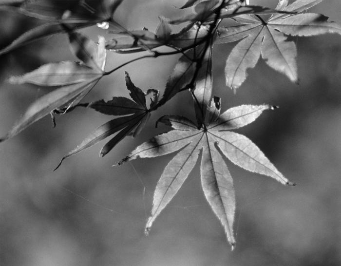 三郷公園の紅葉