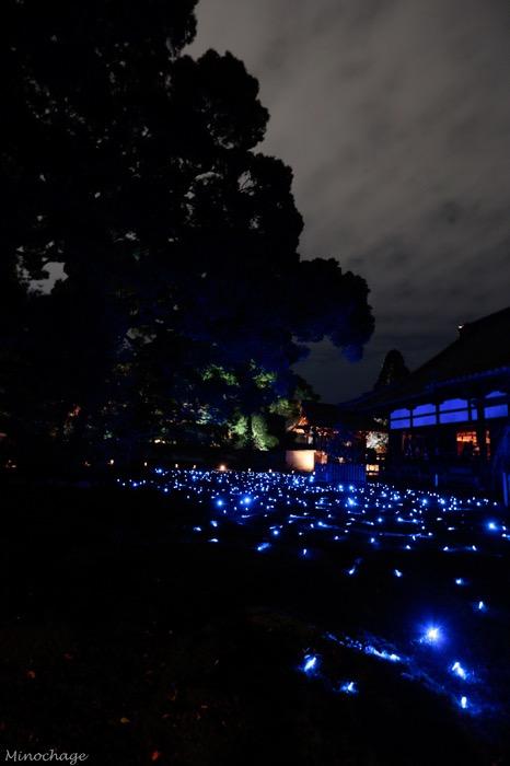 青蓮院のライトアップ
