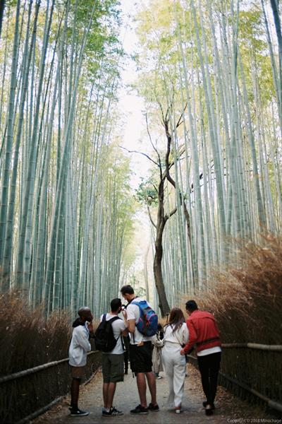 嵐山の竹林(2)