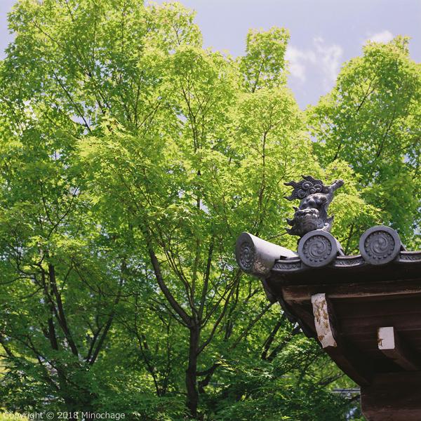 東福寺の近く