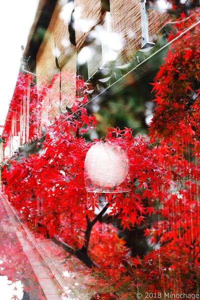 宮川町+建仁時の紅葉(1)