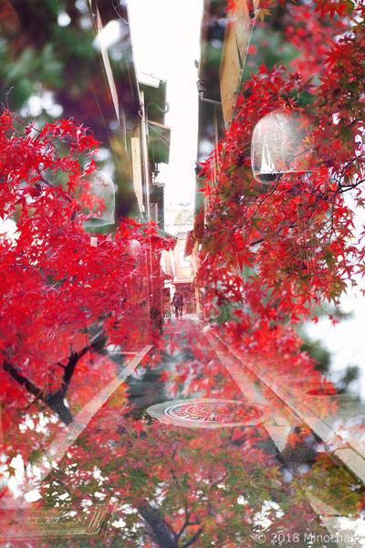 宮川町+建仁時の紅葉(2)
