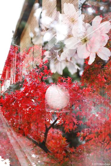 秋と春の多重露光を京都で楽しむ