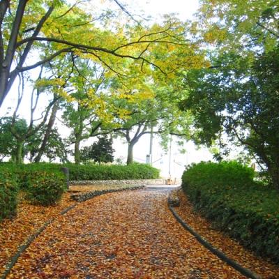 秋の緑地公園