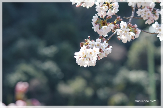 photo 025.jpg