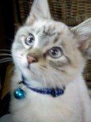 我が家の猫・銀ちゃん