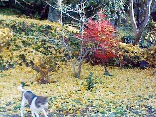 みゅーと黄色いじゅうたん