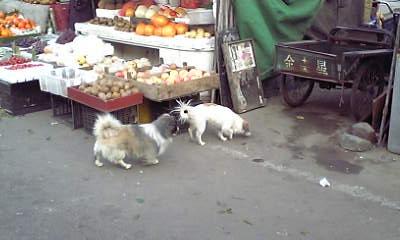 犬その2とその3