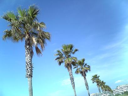 サザンビーチその2