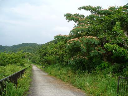 威海で見たことある花