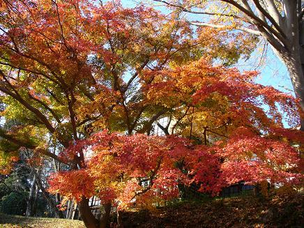 根来寺の紅葉その1