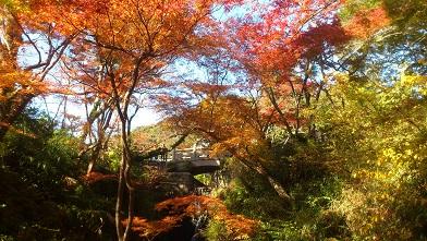 根来寺の紅葉