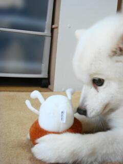 キノコと犬1