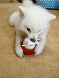 キノコと犬2