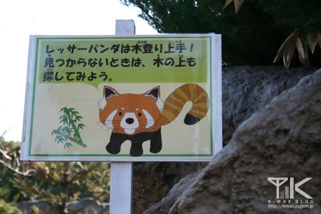 レッサーパンダは木登り上手!