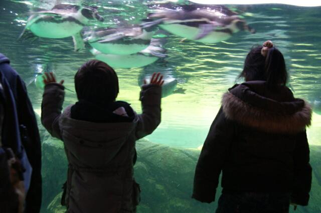 ペンギンに大喜びの子供達♪