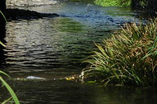 釜川流れ2