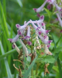鶴田沼の小さな花