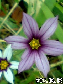 雄山寺の花1