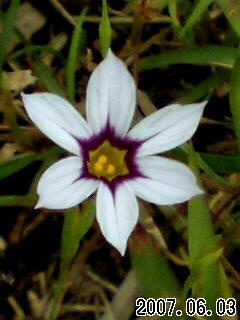 雄山寺の花3