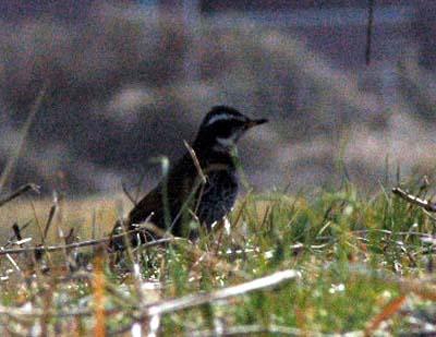 田川の野鳥1