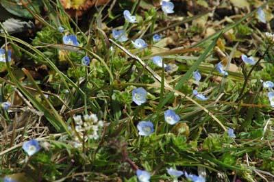 田川の花2