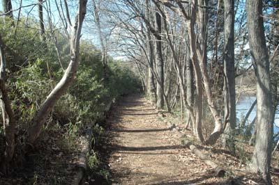 林の小道090307