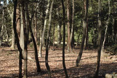 林の中鶴田沼