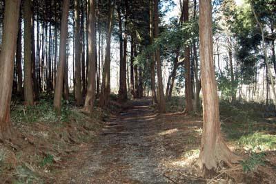 沼の小道2