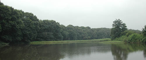 今日の鶴田沼