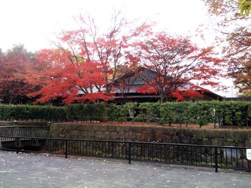 宇都宮城址公園の紅葉