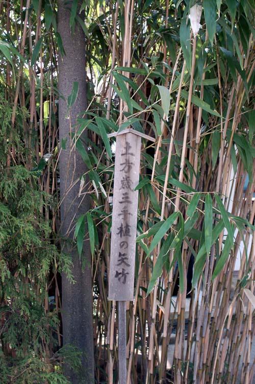 手植矢竹2
