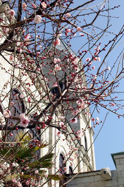 紅梅と教会