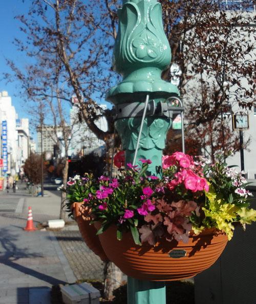 シンボルロードの花