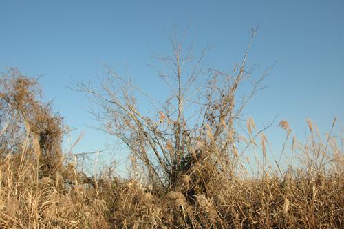 野鳥の留まる木