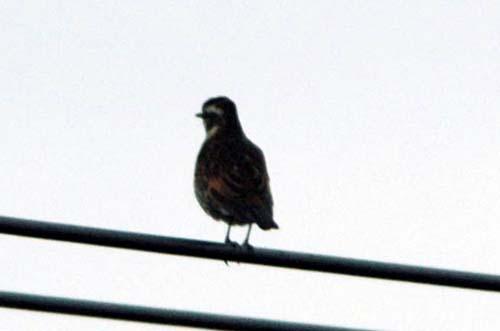 川田水再生センターの野鳥
