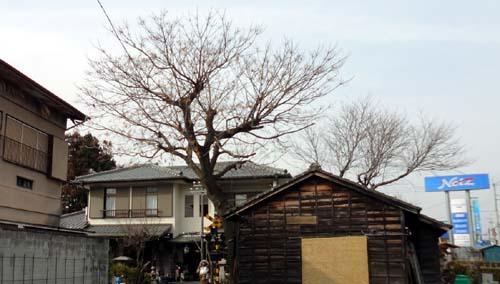 壽薬師堂近くの樹木